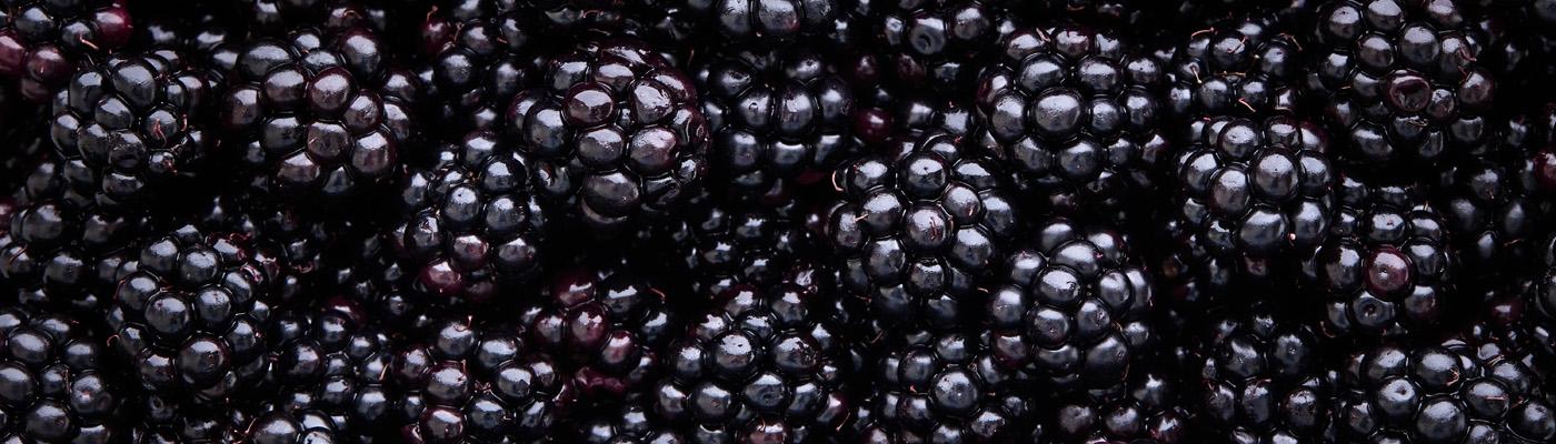 Close-Up von frisch gepflückten Brombeeren